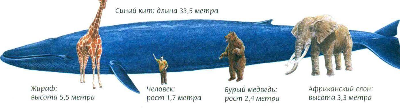 Сравнение самых больших животных