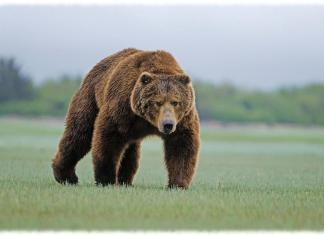 Самые опасные животные в России