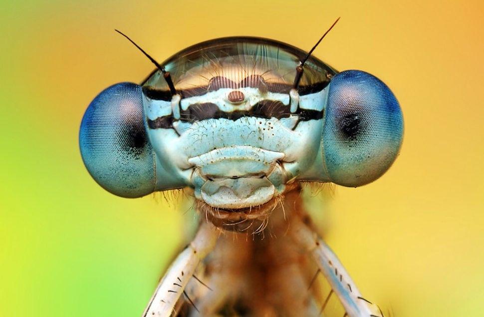 Самые опасные насекомые в России