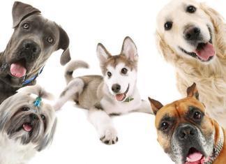 Какие самые популярные породы собак?