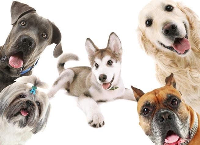 какие самые популярные собаки