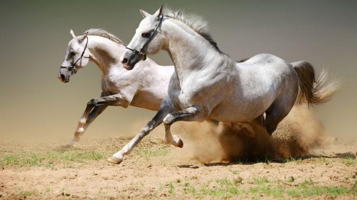 Самые дорогие породы лошадей