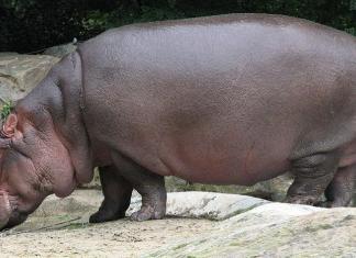 Тяжелые животные
