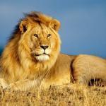 Самые большие хищники в мире