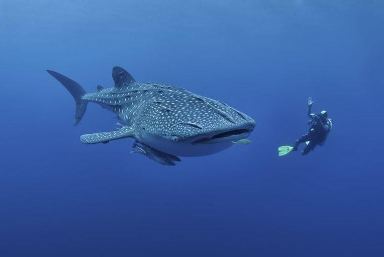Самые большие рыбы