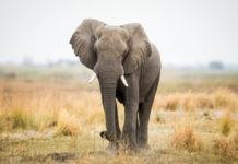 Самые долгоживущие животные на Земле