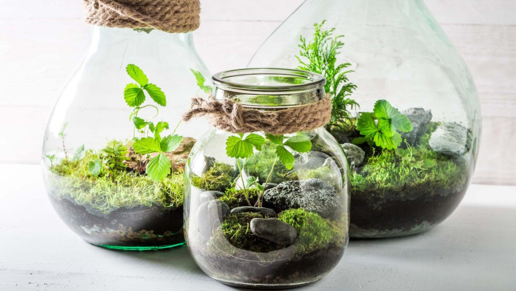 Замкнутая экосистема - сад в бутылке