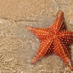 Морские звезды Средиземного моря