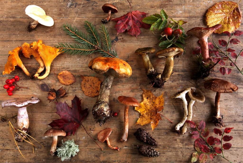 Разнообразие съедобных грибов