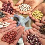 Семена – интересные факты