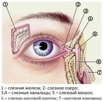 Схема появления слез