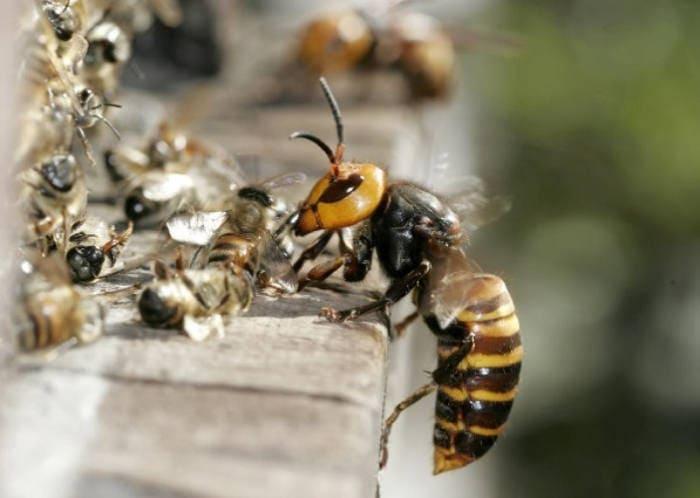 Самые опасные насекомые - список, чем опасны, названия, где водятся, фото и видео