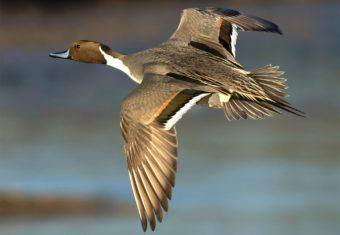 Птицы Урала 🌟 Список, названия с фото, видео, описание, особенности