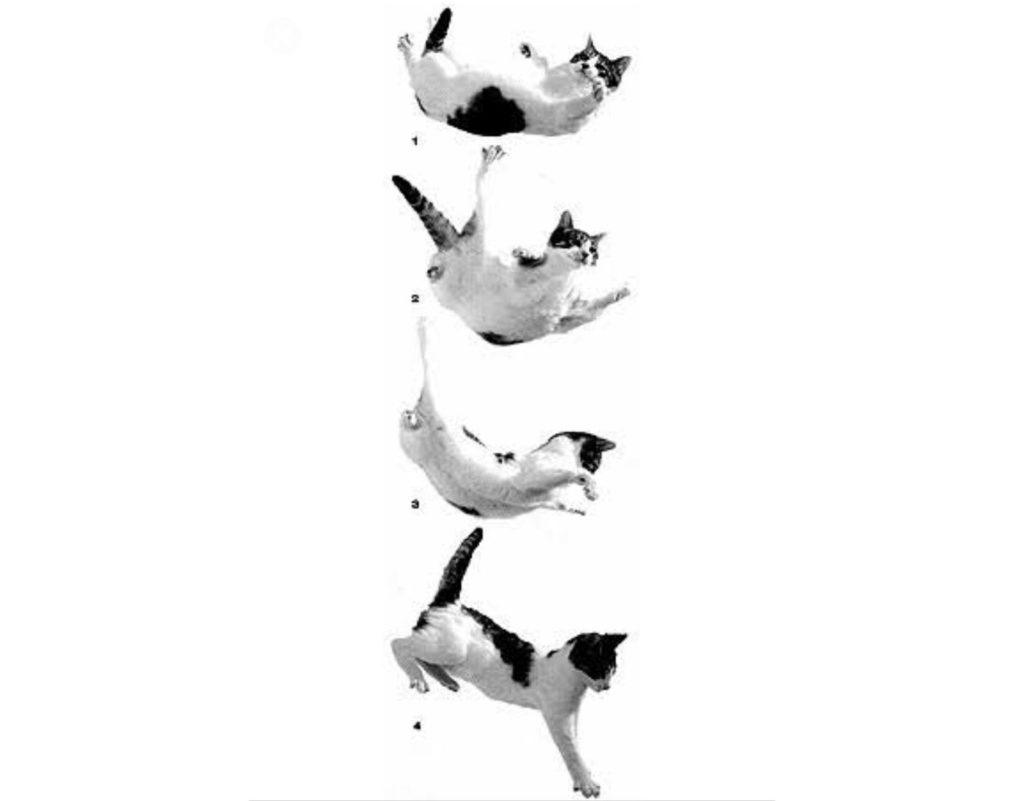 Схема падения кошки