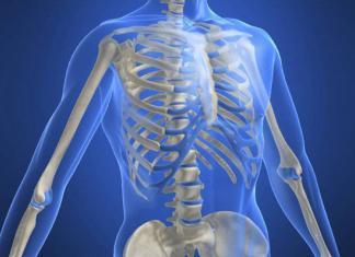 Сколько костей у человека?
