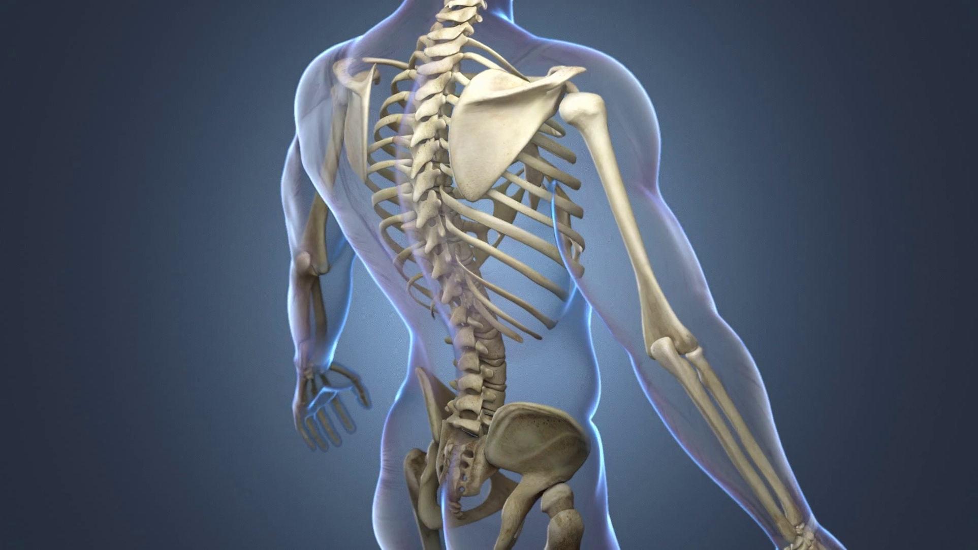 Сколько костей в человеке?