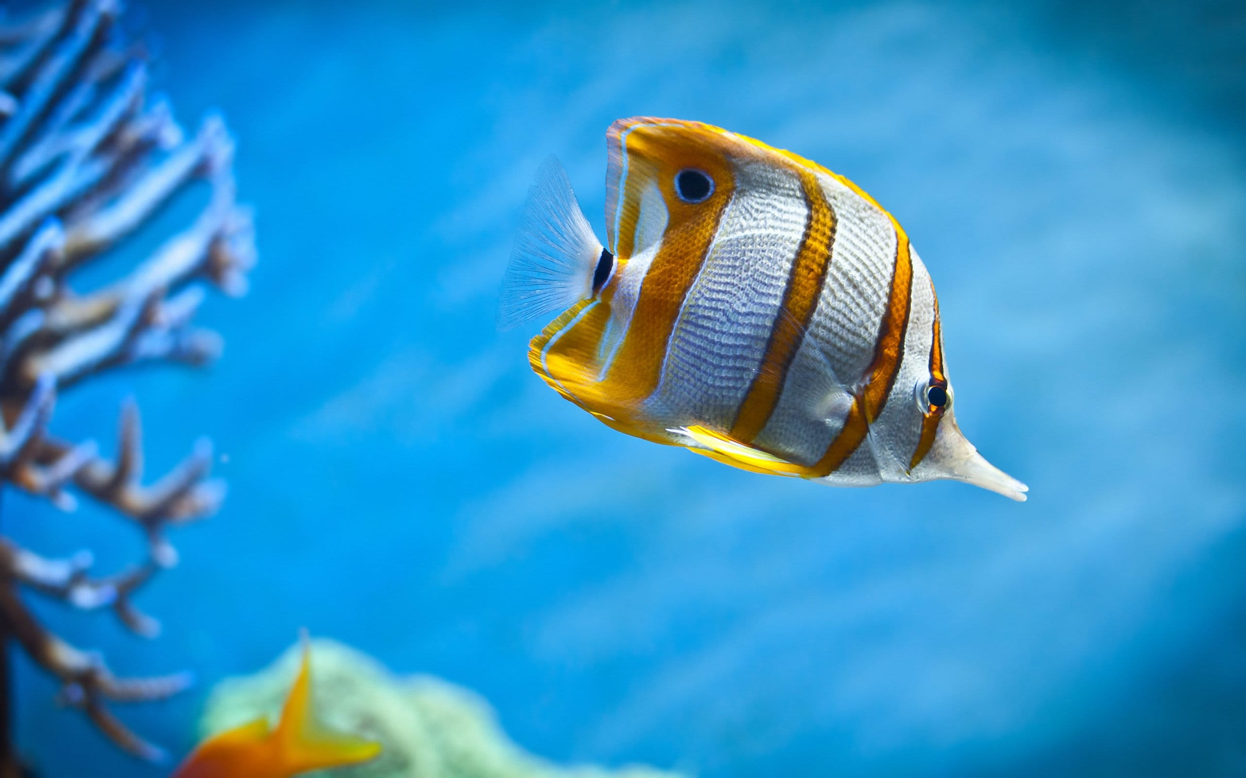 10 самых красивых рыб на планете