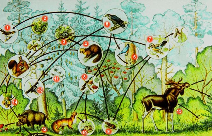 Экосистема смешанного леса