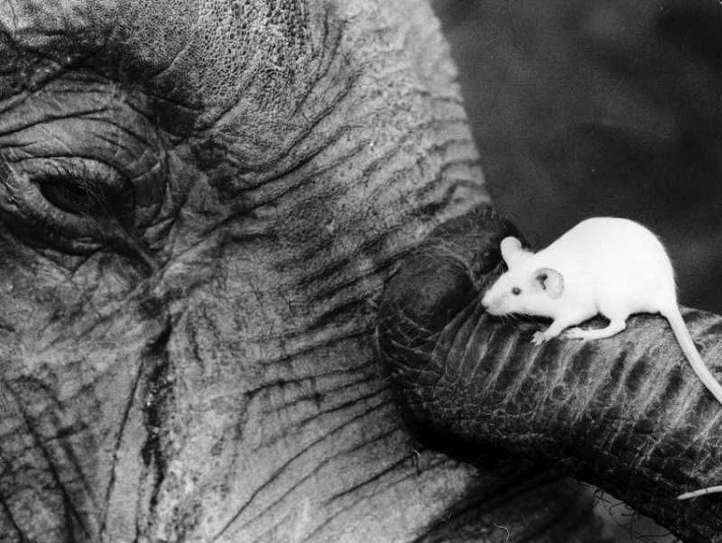 Мышь и слон