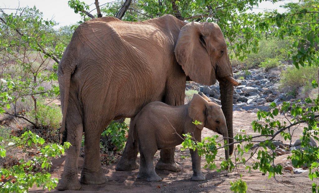 Слоненок и его мама