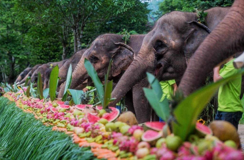 Пиршество, устроенное специально для слонов