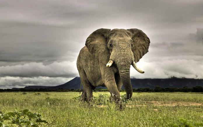 Самые большие животные