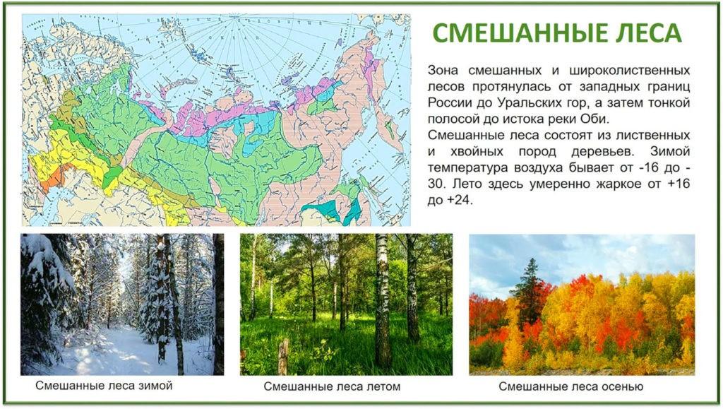 Климат зоны широколиственных и смешанных лесов