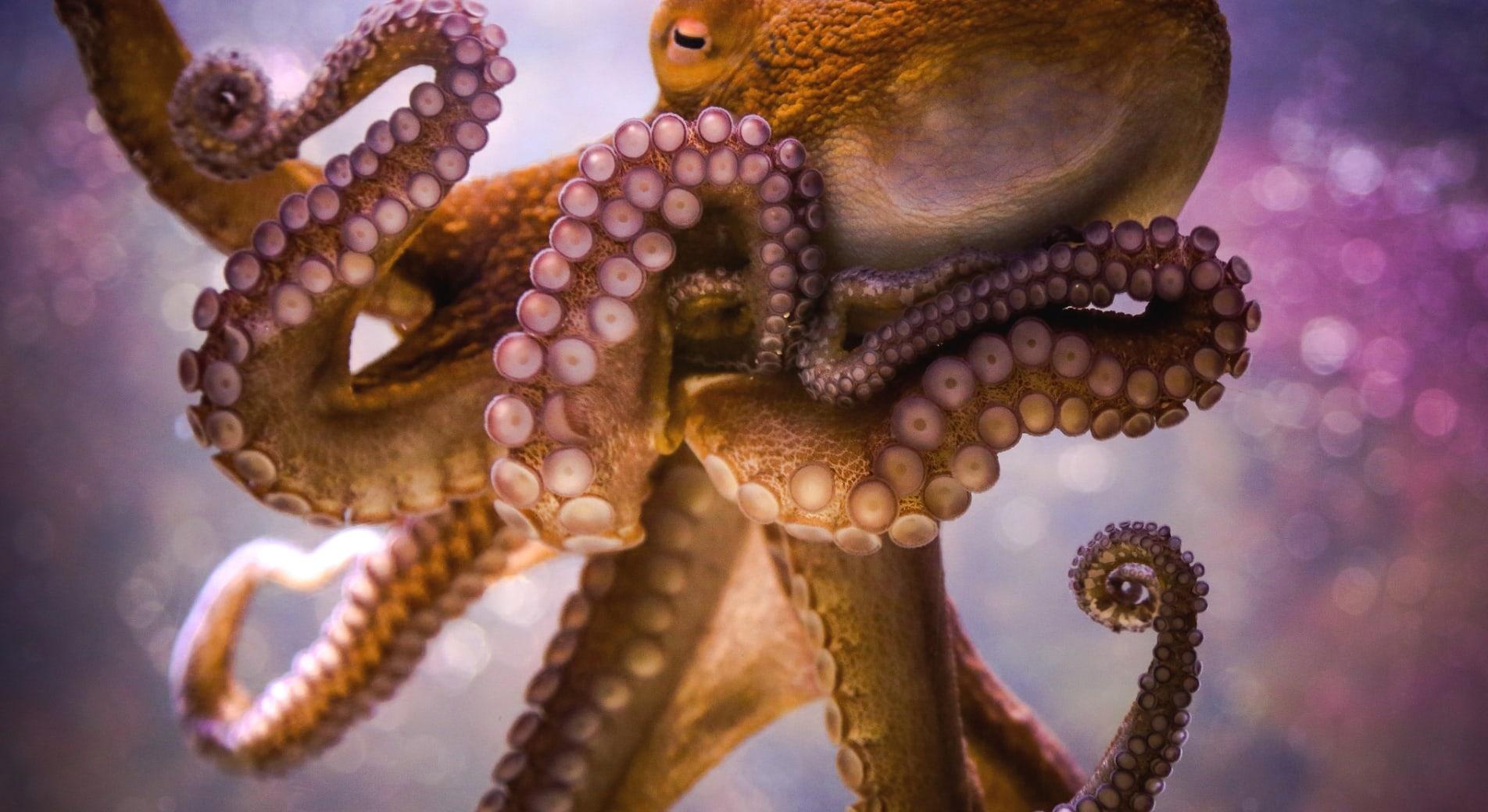 Щупальца осьминога покрыты присосками