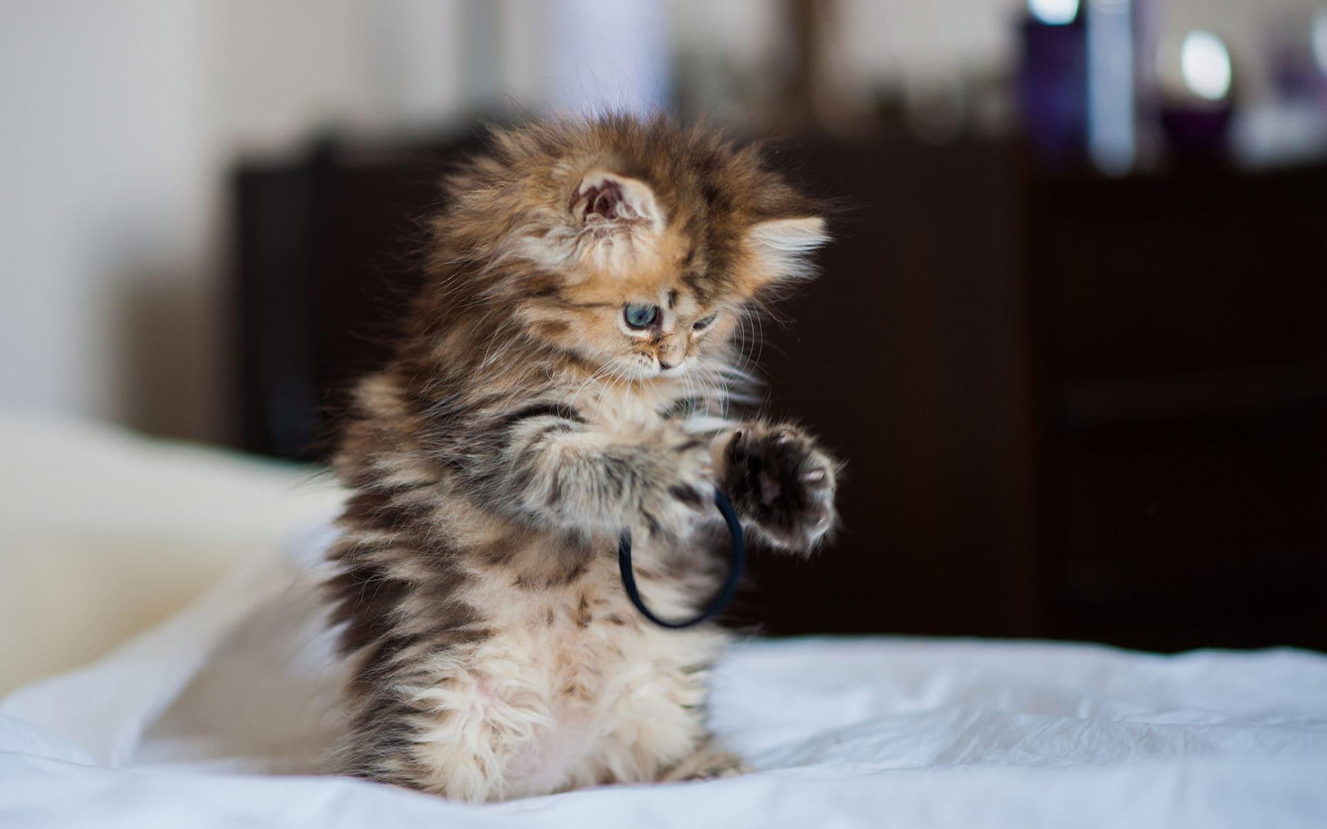 Самые милые и красивые котята картинки