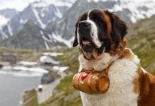 Самые сильные собаки в мире
