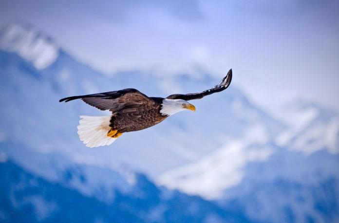 Самые высоко летающие птицы