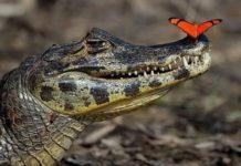 Самые зубастые животные