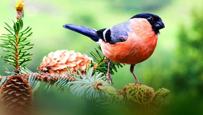 Птицы Урала: фото, видео, названия, описание, особенности
