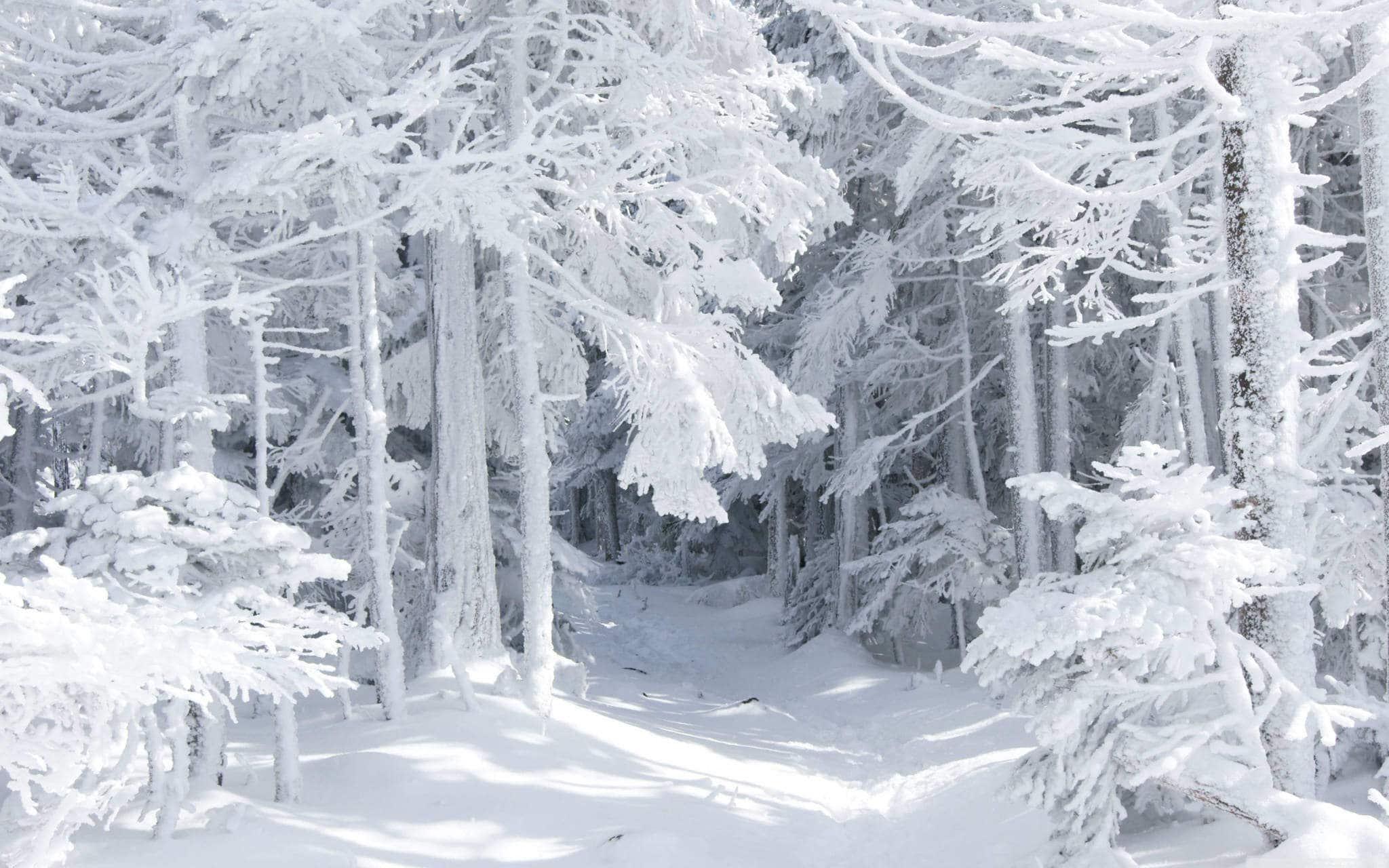Белый снег отражает солнечные лучи