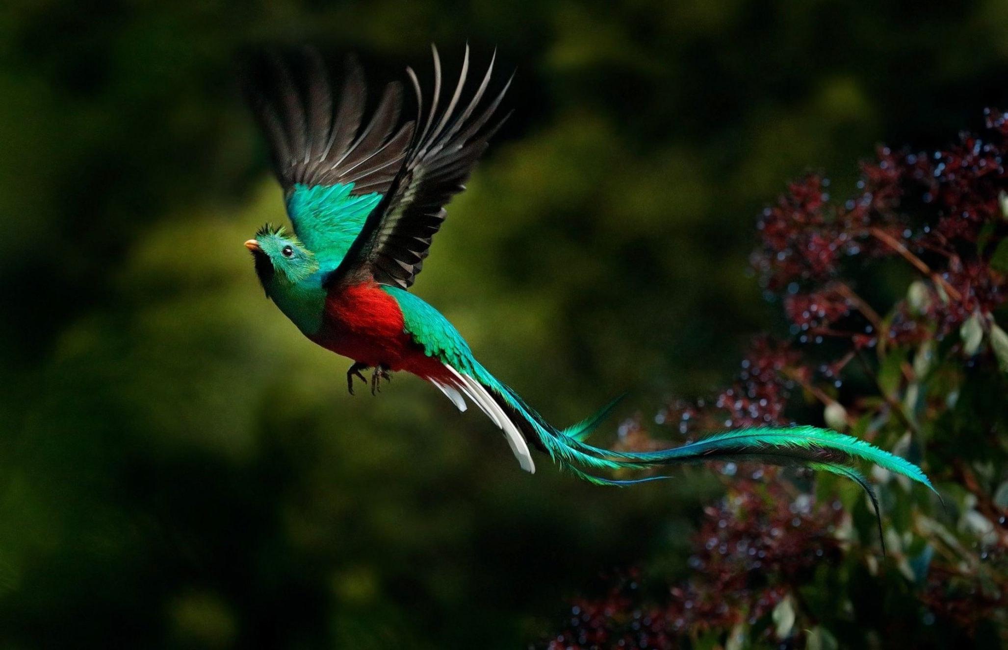 Самые необычные птицы в мире