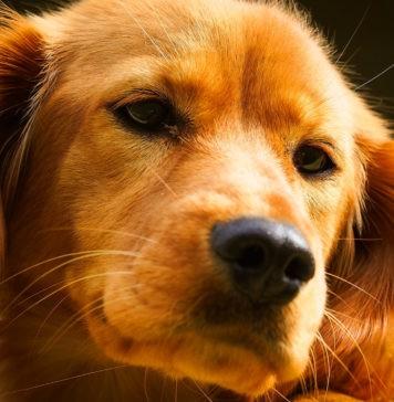 Правда ли, что собаки чувствуют, когда их боятся?