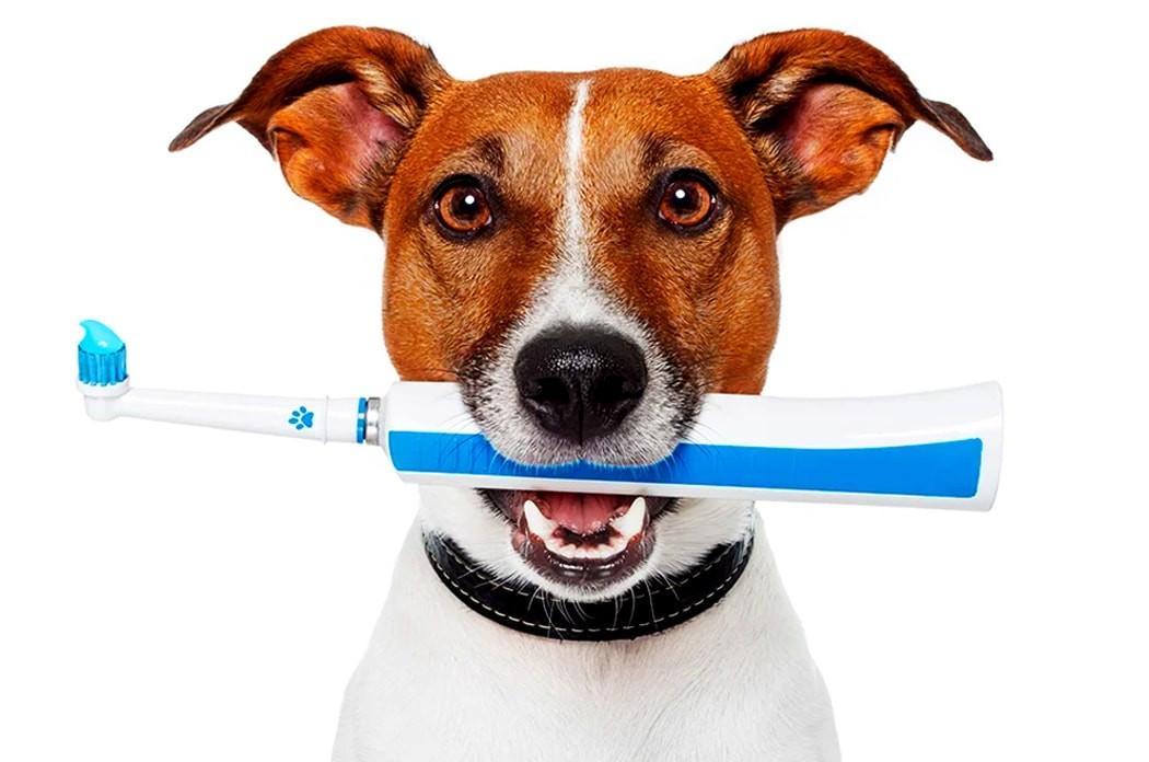 Почему у животных не болят зубы, хоть они их не чистят?
