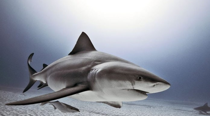 Самые опасные хищники в океане