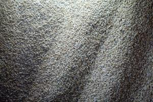 Солод (пророщенное зерно злаков - ржи и ячменя)