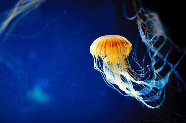 Топ 10 самые большие медузы в мире