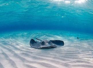 Самые опасные моря в мире