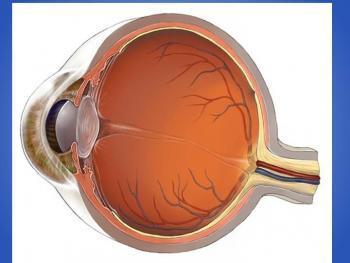 Кровеносные сосуды глаз