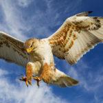10 самых опасных птиц на планете