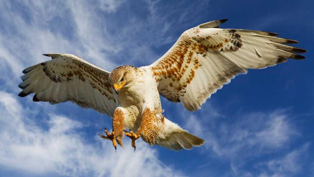 Опасные птицы