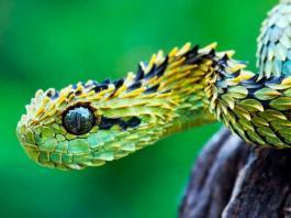 Самые опасные змеи