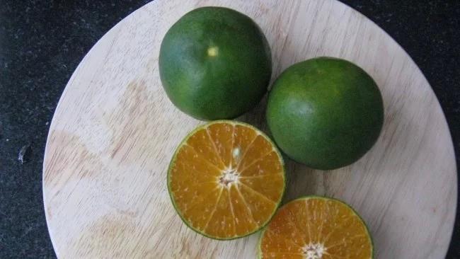 Спелый апельсин - зеленый