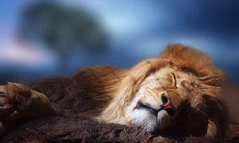 Спящий лев