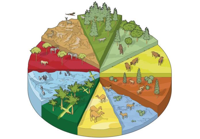 Что значит понятие - среда обитания