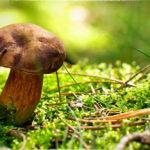 Самые ранние съедобные грибы