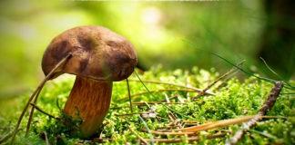 Самые ранние весенние грибы (съедобные)